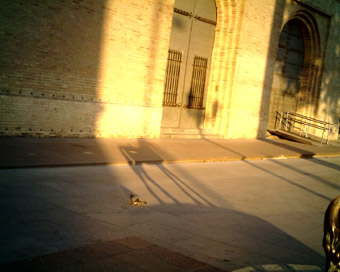 Capturas 2007-08-04